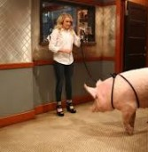Young & Hungry – Young & Piggy (4×04)