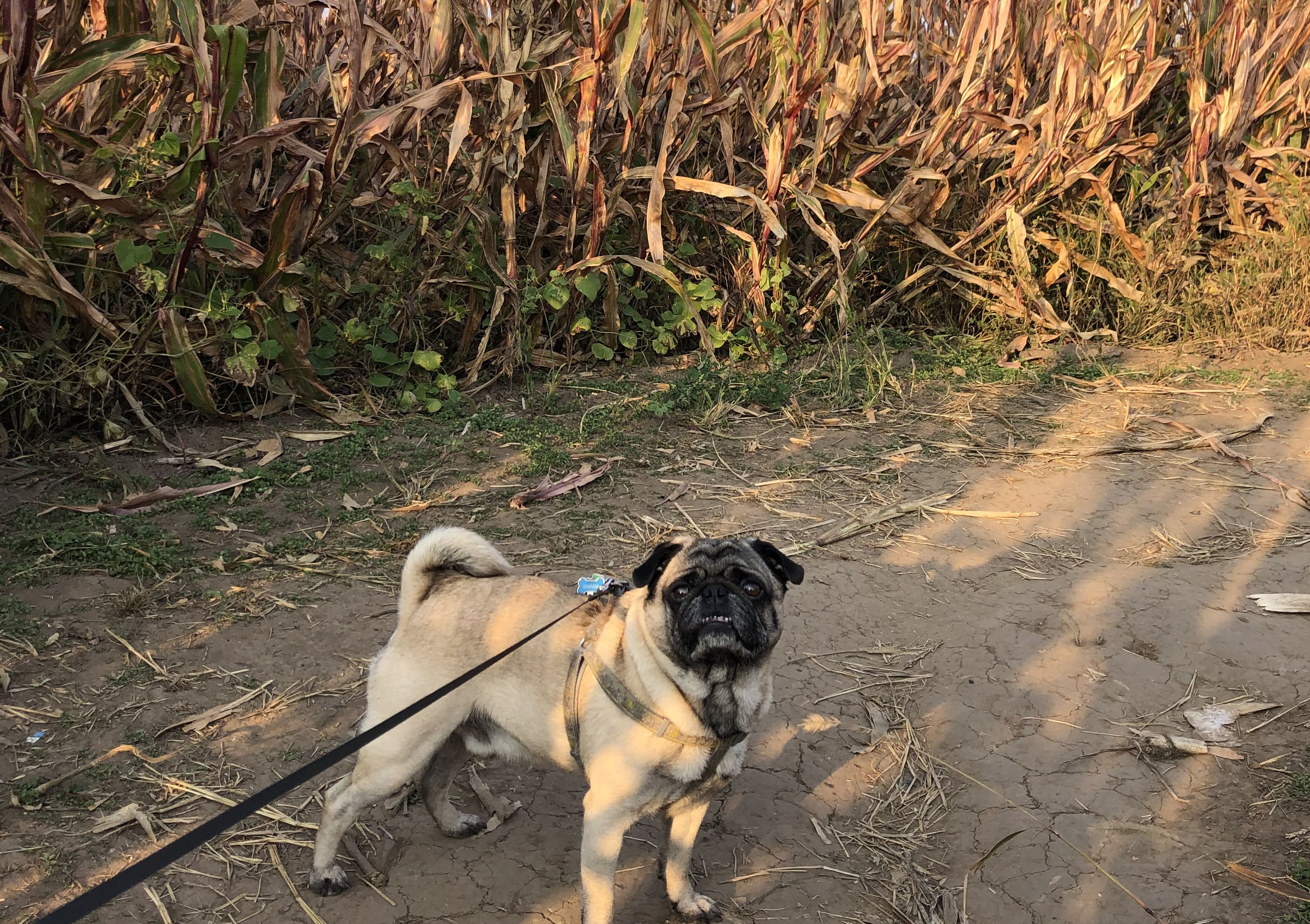 The Best Dog-Friendly Pumpkin Patches in Illinois to Check Out This Fall